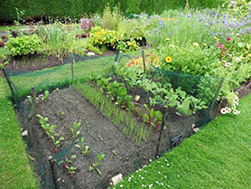 GJ-March-16-Vegetable-garden