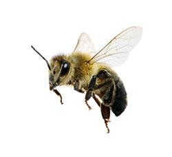 F2-Pollinator-Bee-2--Apr-16-opt