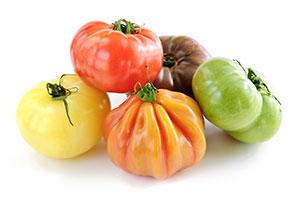 F1-pallen-smith-tomatoes-June-16