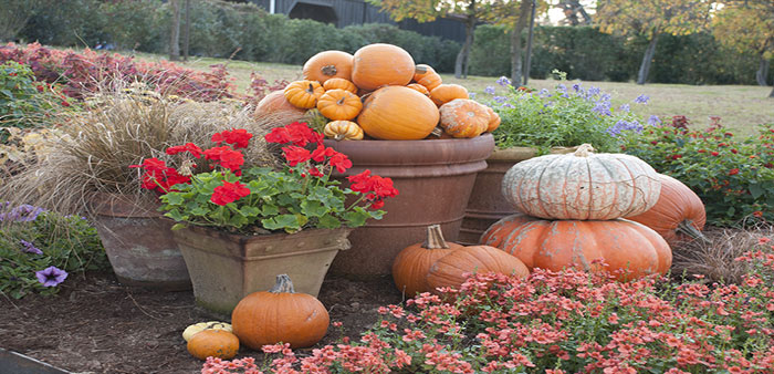 Paint your garden with the colors of fall