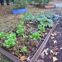 GJ-fall-veg-garden-Sept-16