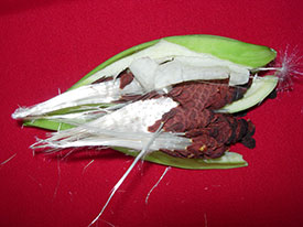 gj-milkweed-seedpod-oct-16