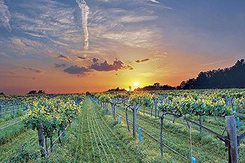 wtd-vineyard-feature