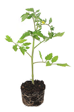 Spring has sprung – Tips for your vegetable garden