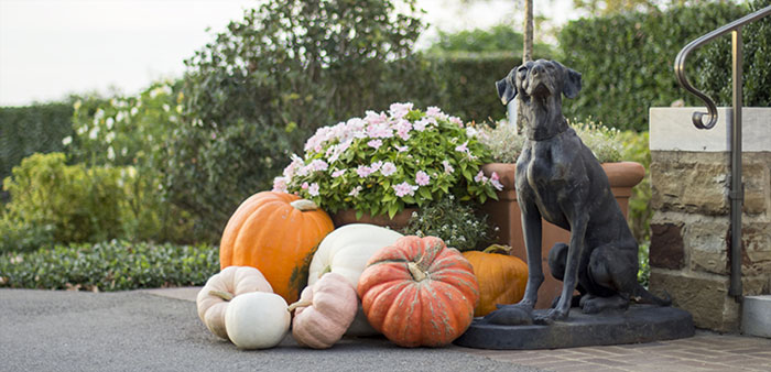 Pumpkin time– Cooking and decorating with my favorite harbinger of fall