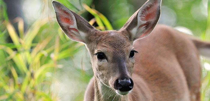 The deer ate my garden!