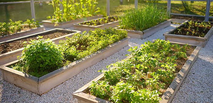 Homegrown – The victory gardens of 2020