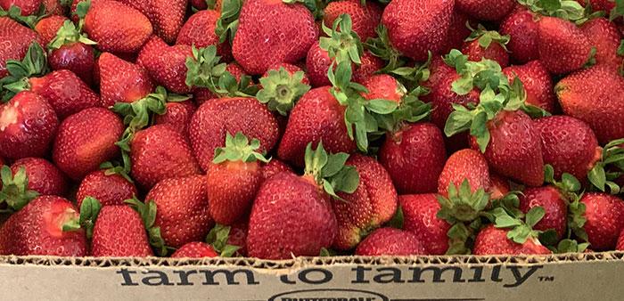 Uniquely Arkansas – Strawberry pickin' time